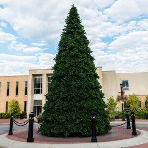 Grand Teton Christmas Tree, Unlit